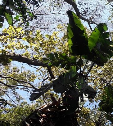 Tree Canopy at Pretoria Botanical Gardens