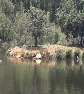 Wetlands at Blue Crane Restaurant, Nieuw Muckleneuk