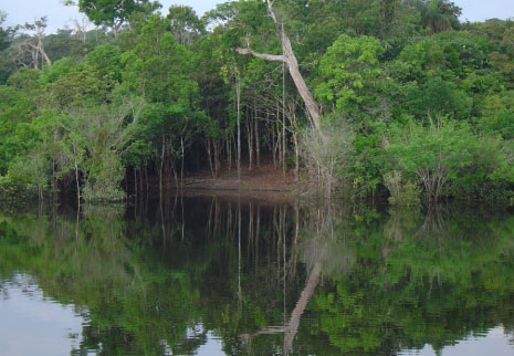 protect natural forest blue blue earth campaign